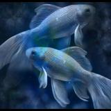 Balık Dönemine Doğru Kaos Bitiyor