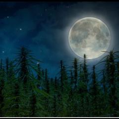 Ay Akrep Burcuna Geçiş Yapıyor