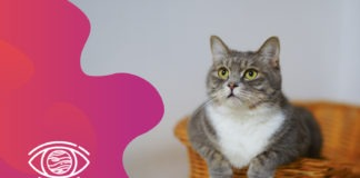 kahve falında kedi görmek, falda kedi, kahve falında